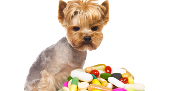 Can you give a dog benadryl if they are on other medication