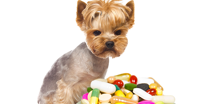 Can You Give Benadryl To A Dog For Anxiety