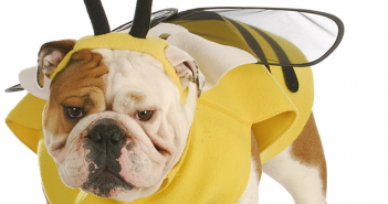 dogs-and-bee-stings