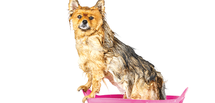 homeade-dry-dog-shampoo