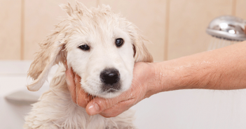 organic-homeade-dog-shampoo