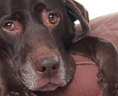 4 ways to comfort a dog with hives