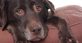 4-ways-to-comfort-a-dog-with-hives