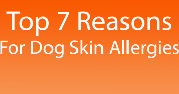 Top 7 Reasons For Skin Allergies In Dogs