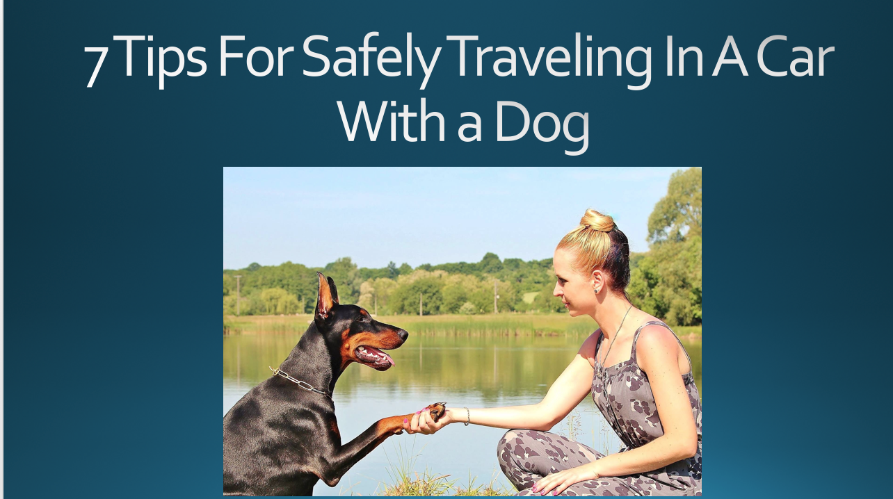 hipmunk tips traveling with pets