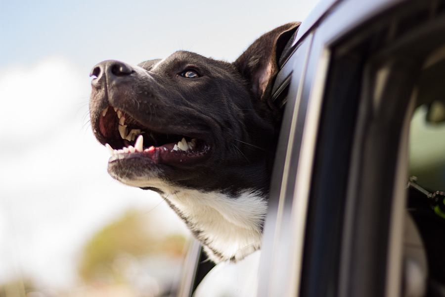 Travel-Safe-With-Dog-Alone-In-Car
